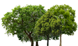 3744 bomen