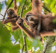 Orangutan Information Centre