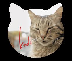 Kat flyers drukken
